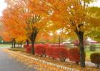 Dolazi jesen 4
