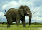 Kad bi svi slonovi odlučili da… 4