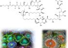 Palitoksin - jedan od najjacih poznatih otrova 7