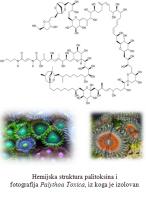 Palitoksin - jedan od najjacih poznatih otrova 1