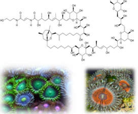 Palitoksin - jedan od najjacih poznatih otrova 21