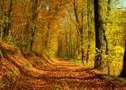 autumn-wallpaper-ii-2