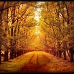 Slika dana: Jesen [22.09.2013]