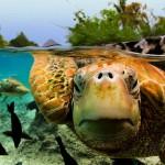 Slika dana: Dan kornjaca [23.05.2014]