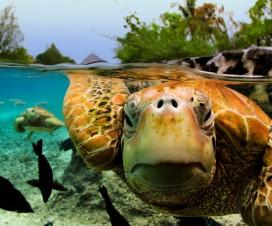 Međunarodni dan kornjača [23.05.2014] 1