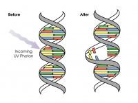 DNK mutacije - promena strukture molekula usled delovanja UV zraka