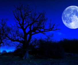 Plavi Mesec 20