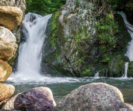 """Predavanje """"Uticaj malih hidroelektrana na životnu sredinu i biološku raznovrsnost Srbije"""" 2"""