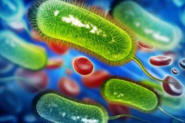 antibiotics-against-bacteria